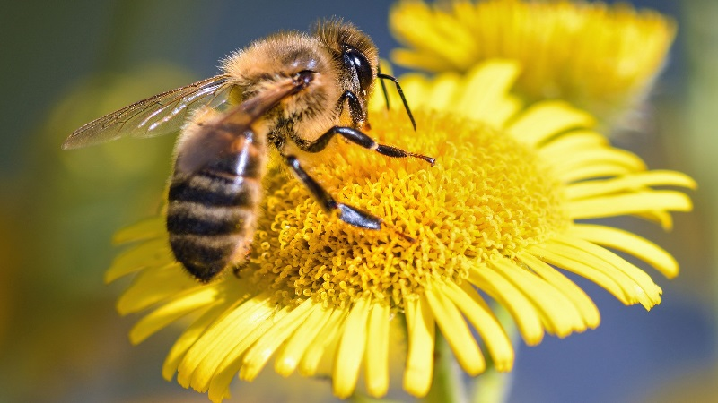 World Bee Day, May 20th 2020