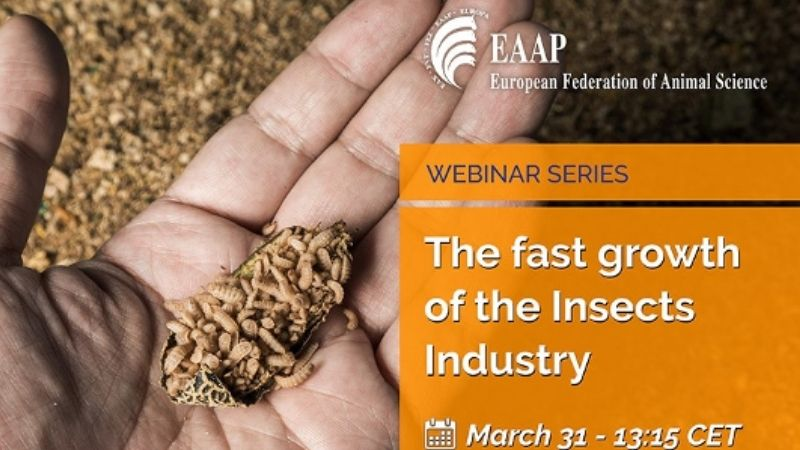 """EAAP Webinar: """"The fast growth of the Insects Industry"""""""